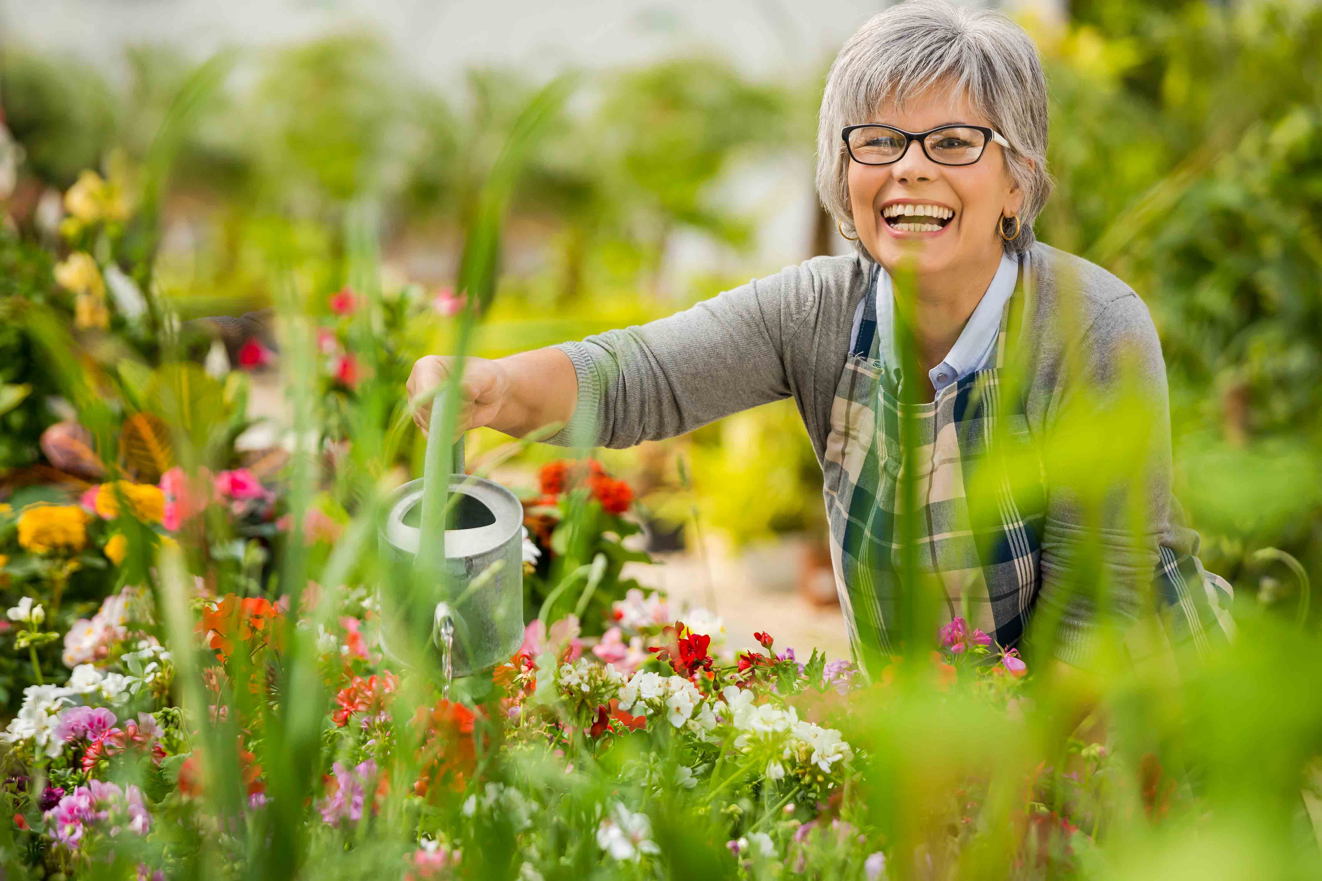 Smiling woman watering colorful flowers in her garden